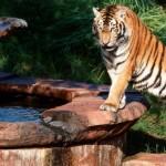 79 Days: Maharajah Jungle Trek